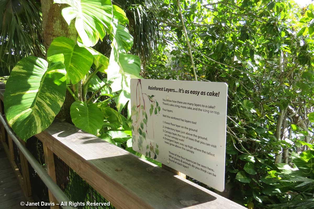 Ann Goldstein Children S Rainforest Garden Janet Davis Explores