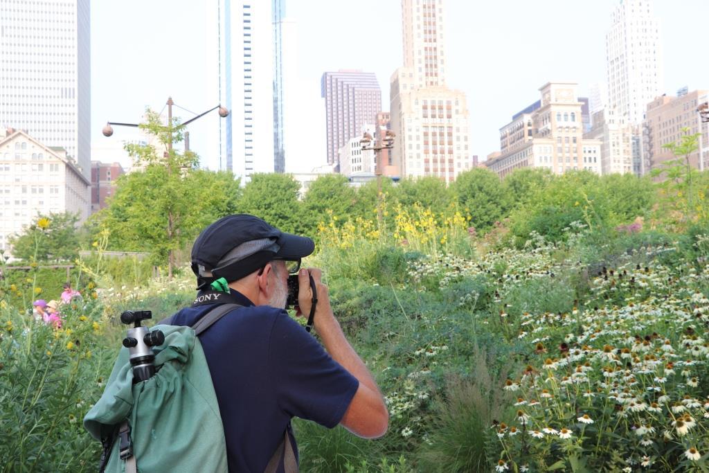 Evoking The Prairie At Chicago S Lurie Garden Janet Davis