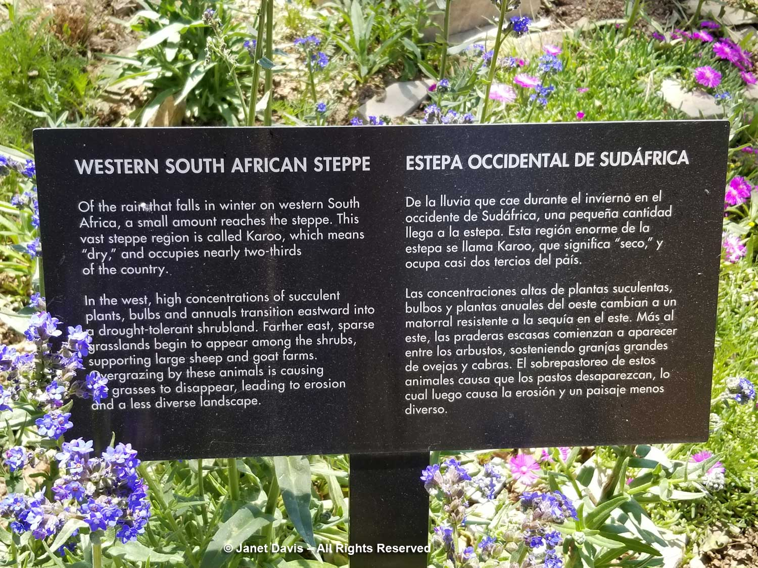 30 Western South Africa Steppe sign Denver Botanic Gardens - Fall Plant & Bulb Sale Denver Botanic Gardens September 27